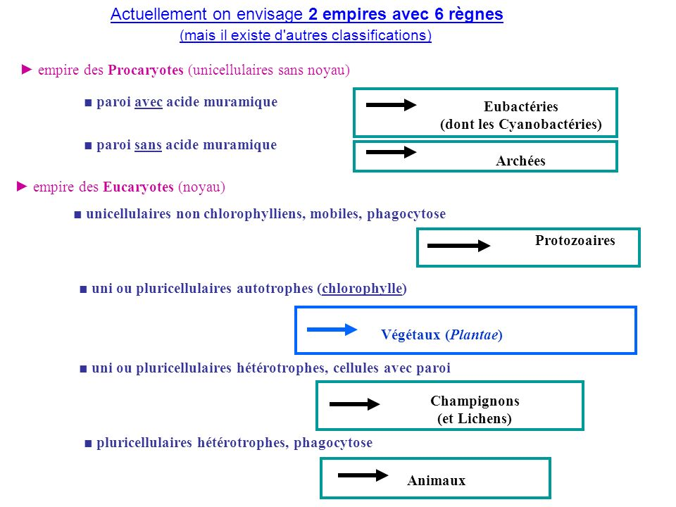 empire des Procaryotes (unicellulaires sans noyau) Eubactéries (dont les Cyanobactéries) empire des Eucaryotes (noyau) unicellulaires non chlorophylli