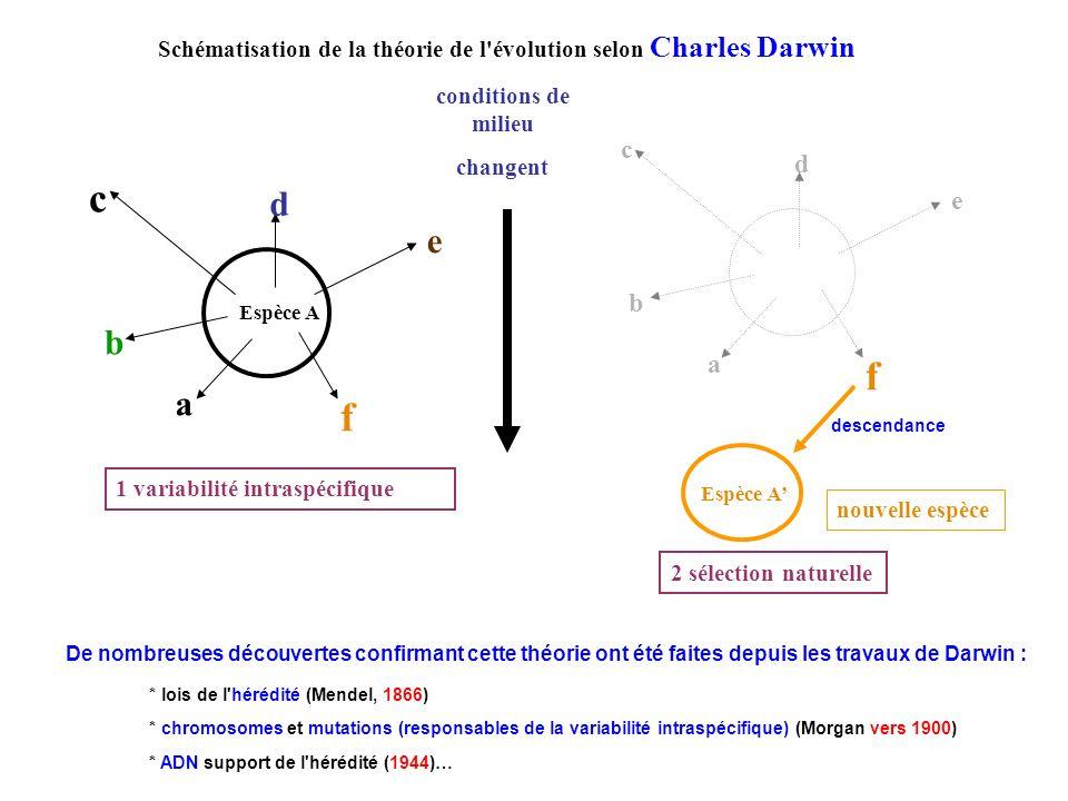 Schématisation de la théorie de l'évolution selon Charles Darwin conditions de milieu changent a e d c b f nouvelle espèce c a e d b f Espèce A 1 vari
