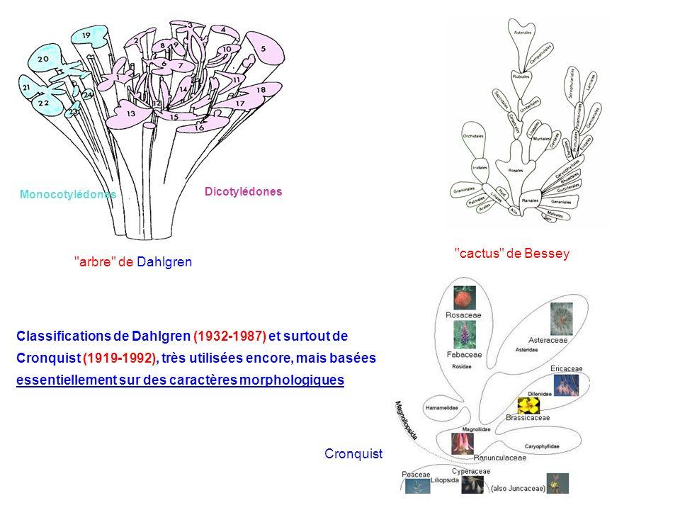 Dicotylédones Monocotylédones
