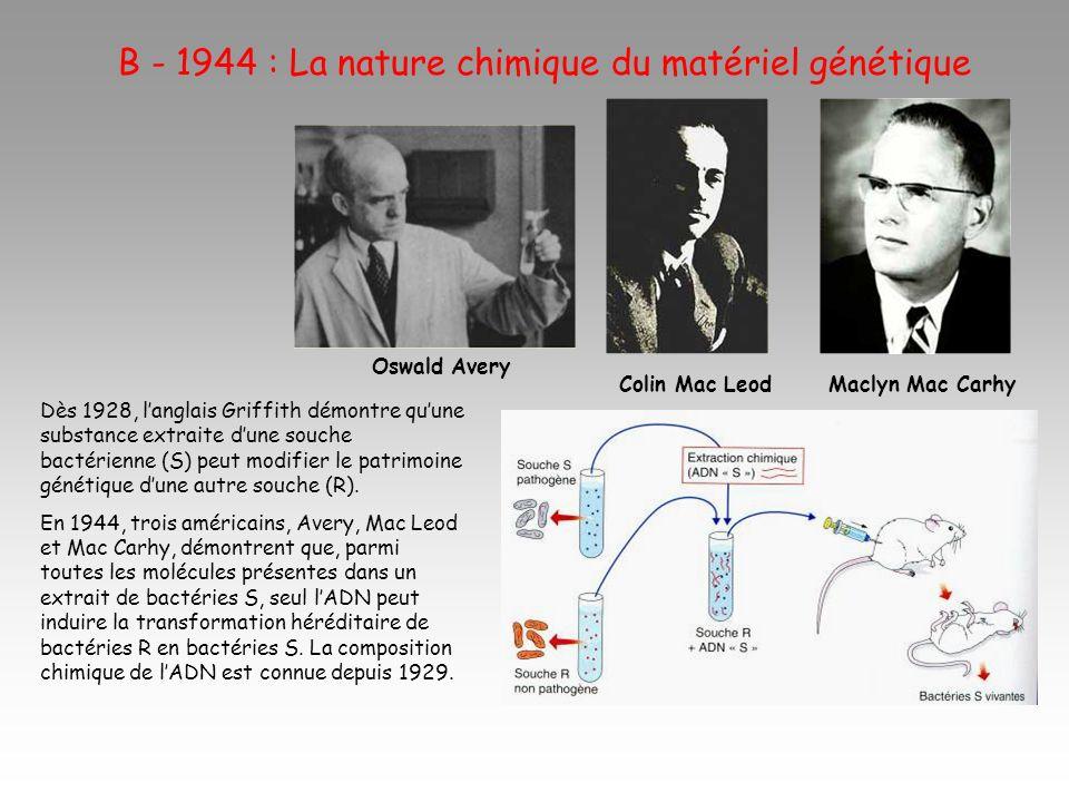 B - 1944 : La nature chimique du matériel génétique Dès 1928, langlais Griffith démontre quune substance extraite dune souche bactérienne (S) peut modifier le patrimoine génétique dune autre souche (R).