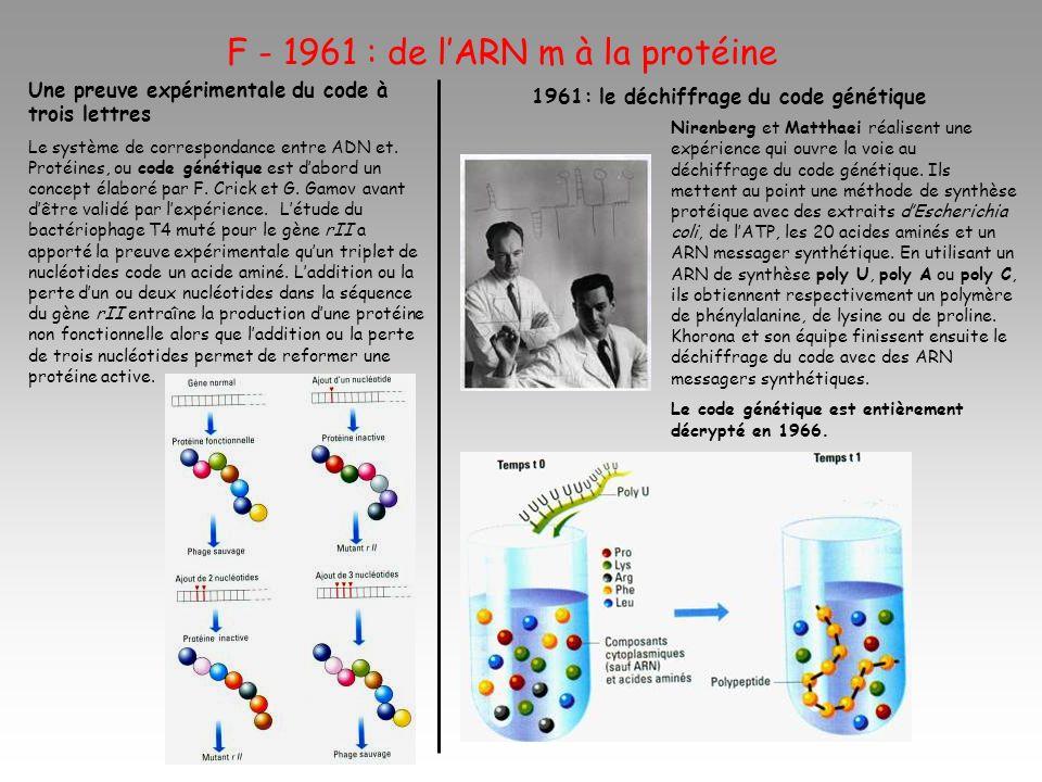 F - 1961 : de lARN m à la protéine Une preuve expérimentale du code à trois lettres Le système de correspondance entre ADN et. Protéines, ou code géné