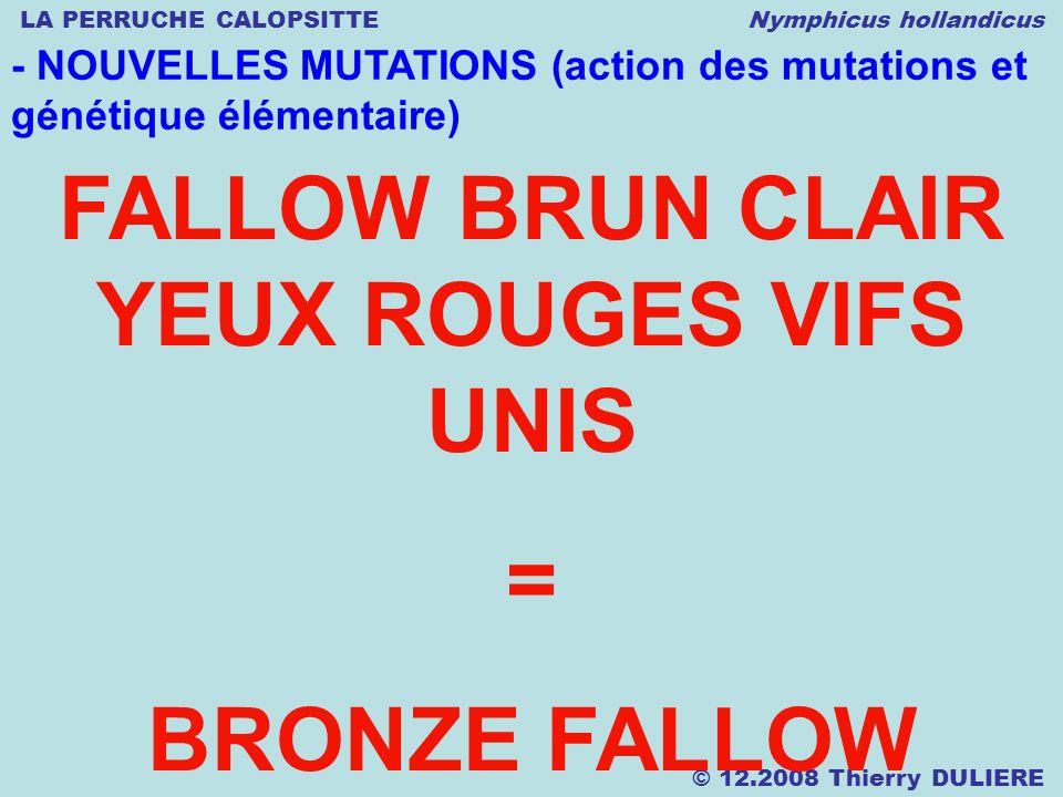 LA PERRUCHE CALOPSITTE Nymphicus hollandicus © 12.2008 Thierry DULIERE - NOUVELLES MUTATIONS (action des mutations et génétique élémentaire) FALLOW BR
