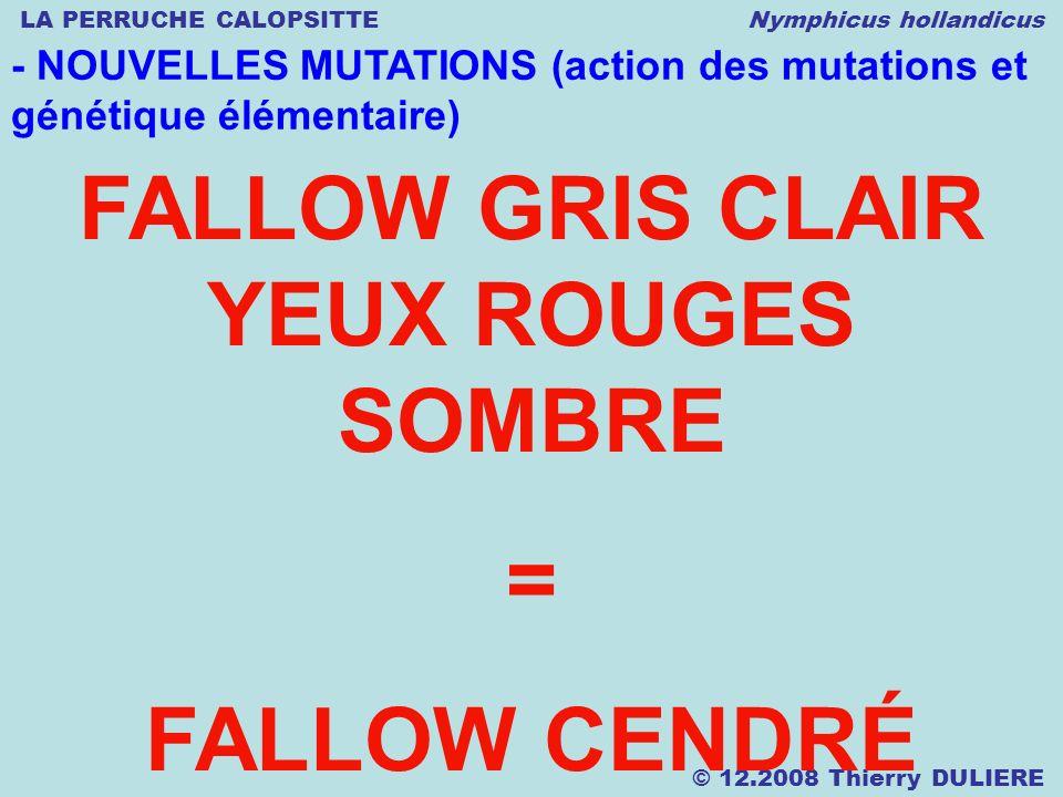 LA PERRUCHE CALOPSITTE Nymphicus hollandicus © 12.2008 Thierry DULIERE - NOUVELLES MUTATIONS (action des mutations et génétique élémentaire) FALLOW GR