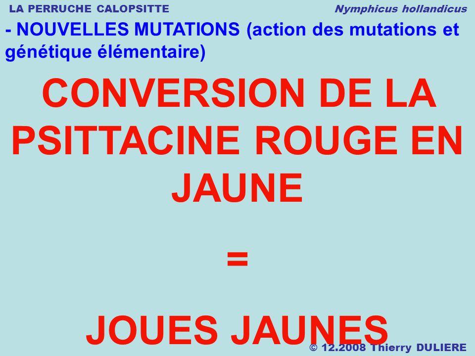 LA PERRUCHE CALOPSITTE Nymphicus hollandicus © 12.2008 Thierry DULIERE - NOUVELLES MUTATIONS (action des mutations et génétique élémentaire) CONVERSIO