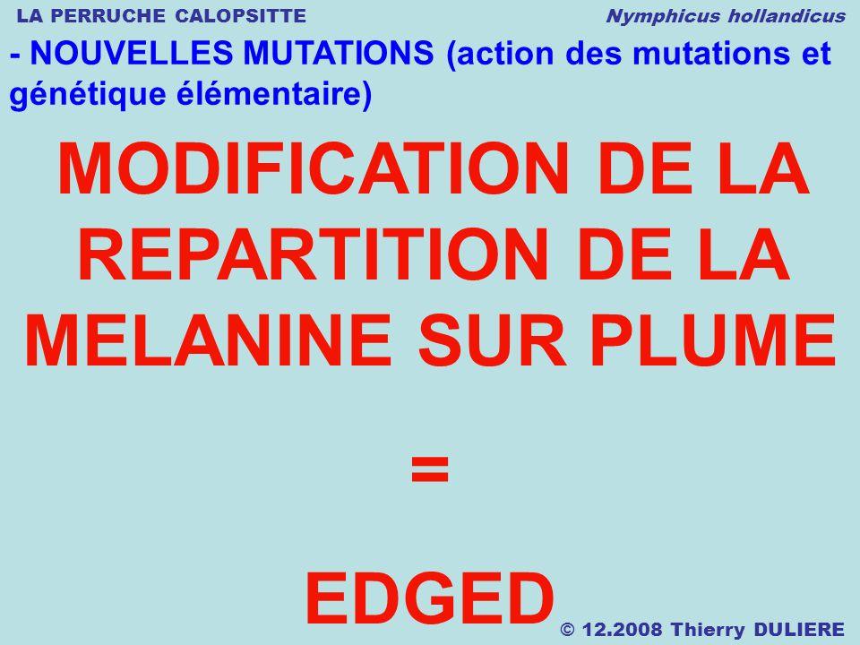 LA PERRUCHE CALOPSITTE Nymphicus hollandicus © 12.2008 Thierry DULIERE - NOUVELLES MUTATIONS (action des mutations et génétique élémentaire) MODIFICAT