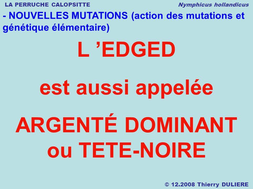 LA PERRUCHE CALOPSITTE Nymphicus hollandicus © 12.2008 Thierry DULIERE - NOUVELLES MUTATIONS (action des mutations et génétique élémentaire) L EDGED e