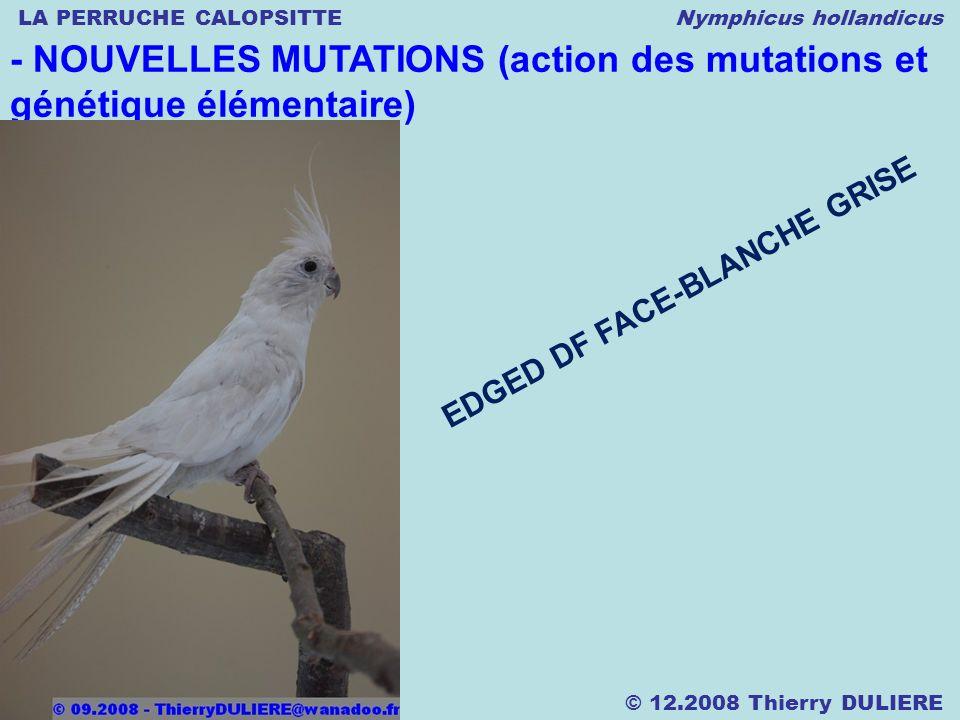 LA PERRUCHE CALOPSITTE Nymphicus hollandicus © 12.2008 Thierry DULIERE - NOUVELLES MUTATIONS (action des mutations et génétique élémentaire) EDGED DF