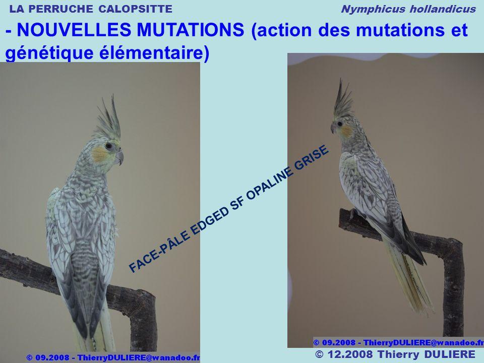 LA PERRUCHE CALOPSITTE Nymphicus hollandicus © 12.2008 Thierry DULIERE - NOUVELLES MUTATIONS (action des mutations et génétique élémentaire) FACE-PÂLE