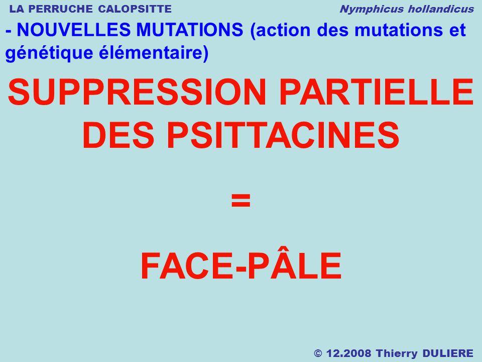 LA PERRUCHE CALOPSITTE Nymphicus hollandicus © 12.2008 Thierry DULIERE - NOUVELLES MUTATIONS (action des mutations et génétique élémentaire) SUPPRESSI
