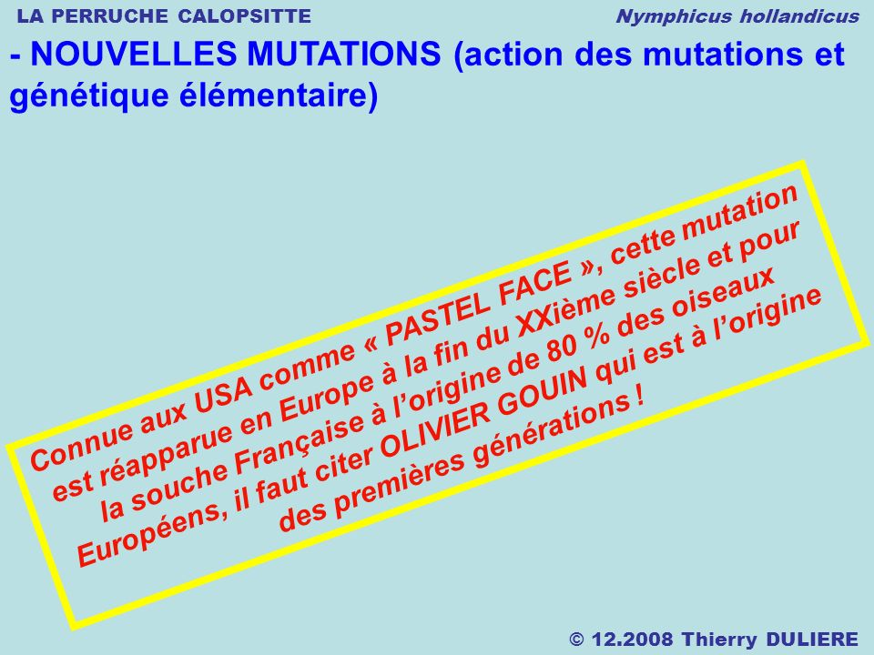 LA PERRUCHE CALOPSITTE Nymphicus hollandicus © 12.2008 Thierry DULIERE - NOUVELLES MUTATIONS (action des mutations et génétique élémentaire) Connue au