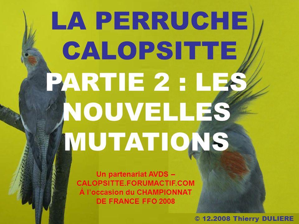 © 12.2008 Thierry DULIERE LA PERRUCHE CALOPSITTE PARTIE 2 : LES NOUVELLES MUTATIONS Un partenariat AVDS – CALOPSITTE.FORUMACTIF.COM À loccasion du CHA