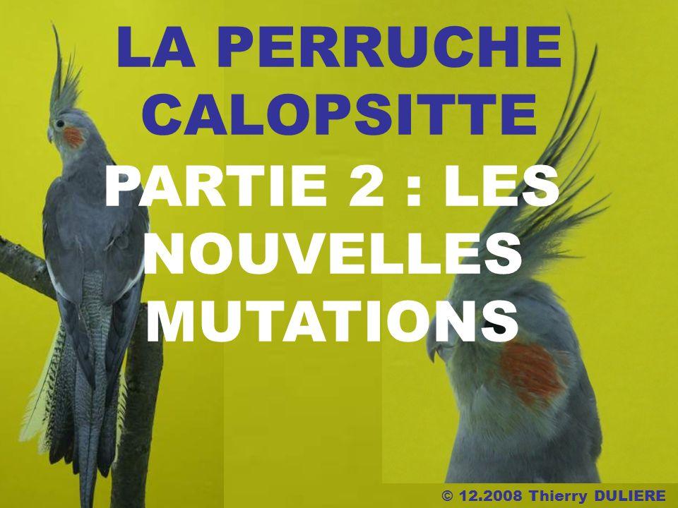© 12.2008 Thierry DULIERE LA PERRUCHE CALOPSITTE PARTIE 2 : LES NOUVELLES MUTATIONS