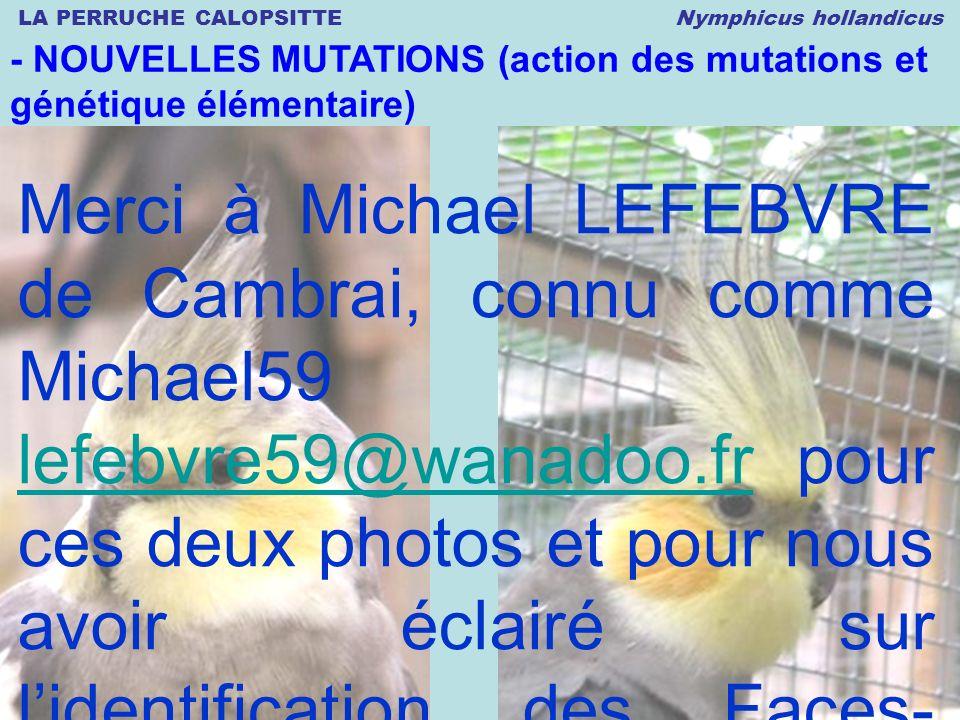 LA PERRUCHE CALOPSITTE Nymphicus hollandicus © 12.2008 Thierry DULIERE - NOUVELLES MUTATIONS (action des mutations et génétique élémentaire) Merci à M