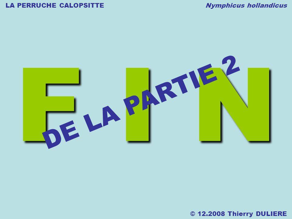 LA PERRUCHE CALOPSITTE Nymphicus hollandicus © 12.2008 Thierry DULIERE F I N DE LA PARTIE 2