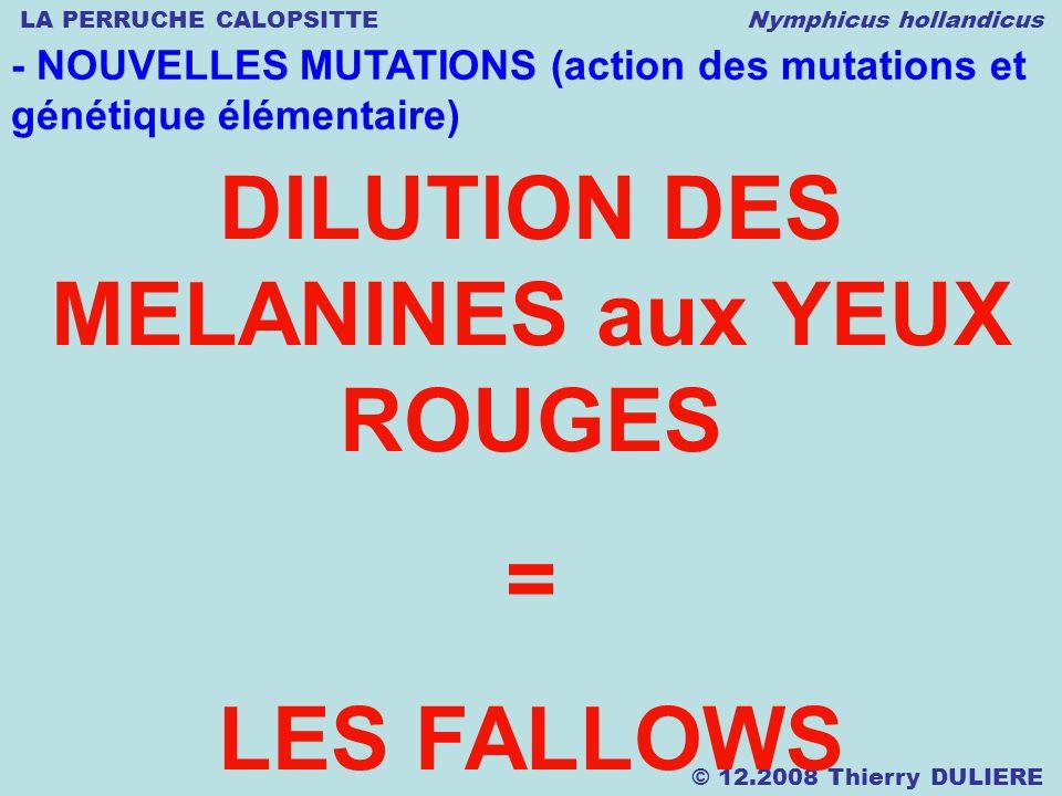 LA PERRUCHE CALOPSITTE Nymphicus hollandicus © 12.2008 Thierry DULIERE - NOUVELLES MUTATIONS (action des mutations et génétique élémentaire) DILUTION
