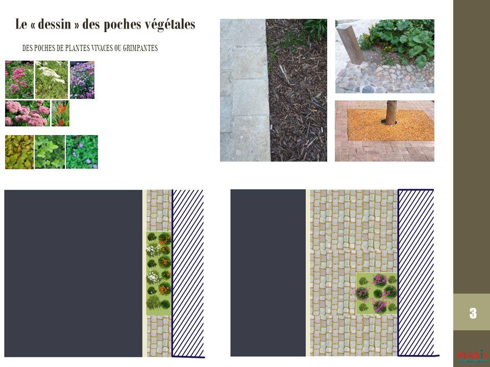 3 Le « dessin » des poches végétales DES POCHES DE PLANTES VIVACES OU GRIMPANTES