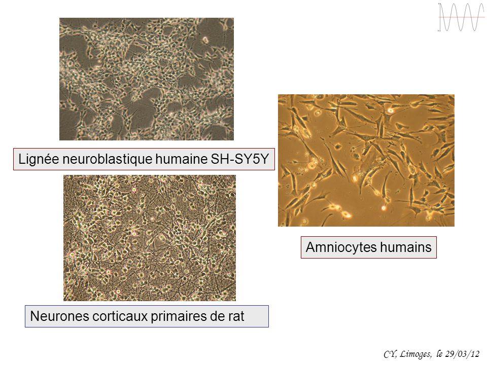 Lignée neuroblastique humaine SH-SY5Y Neurones corticaux primaires de rat Amniocytes humains CY, Limoges, le 29/03/12