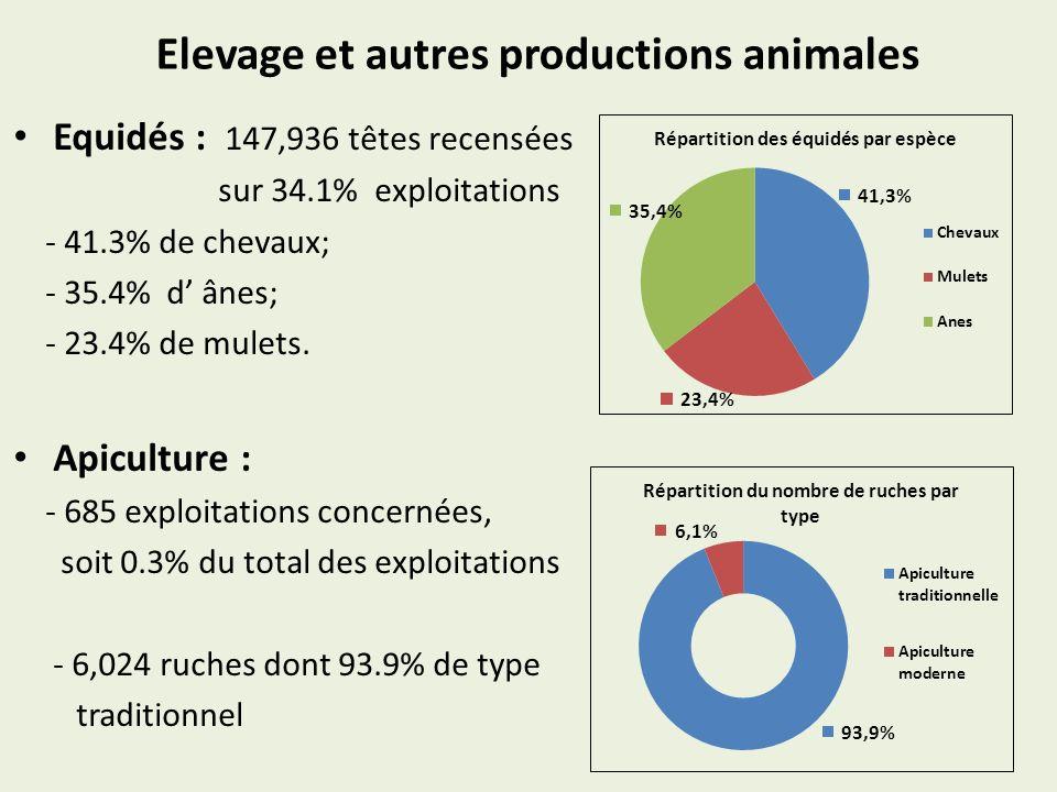 Elevage et autres productions animales Equidés : 147,936 têtes recensées sur 34.1% exploitations - 41.3% de chevaux; - 35.4% d ânes; - 23.4% de mulets.