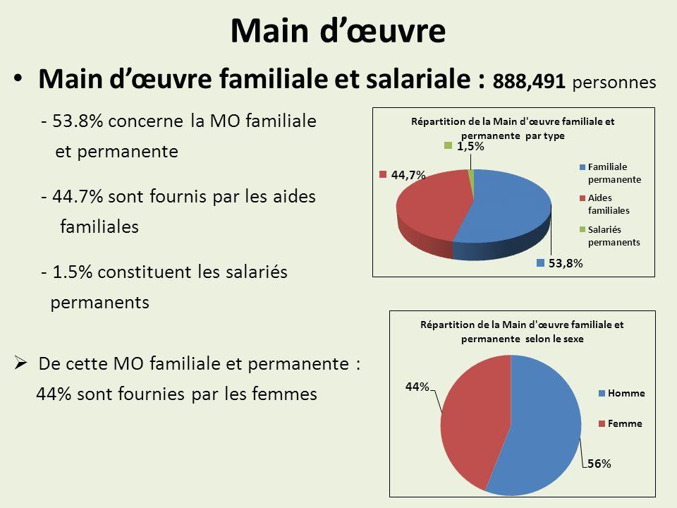 Main dœuvre Main dœuvre familiale et salariale : 888,491 personnes - 53.8% concerne la MO familiale et permanente - 44.7% sont fournis par les aides familiales - 1.5% constituent les salariés permanents De cette MO familiale et permanente : 44% sont fournies par les femmes
