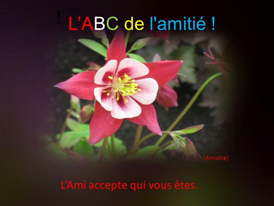 (Ancolie) LAmi accepte qui vous êtes. ! LABC de l amitié !