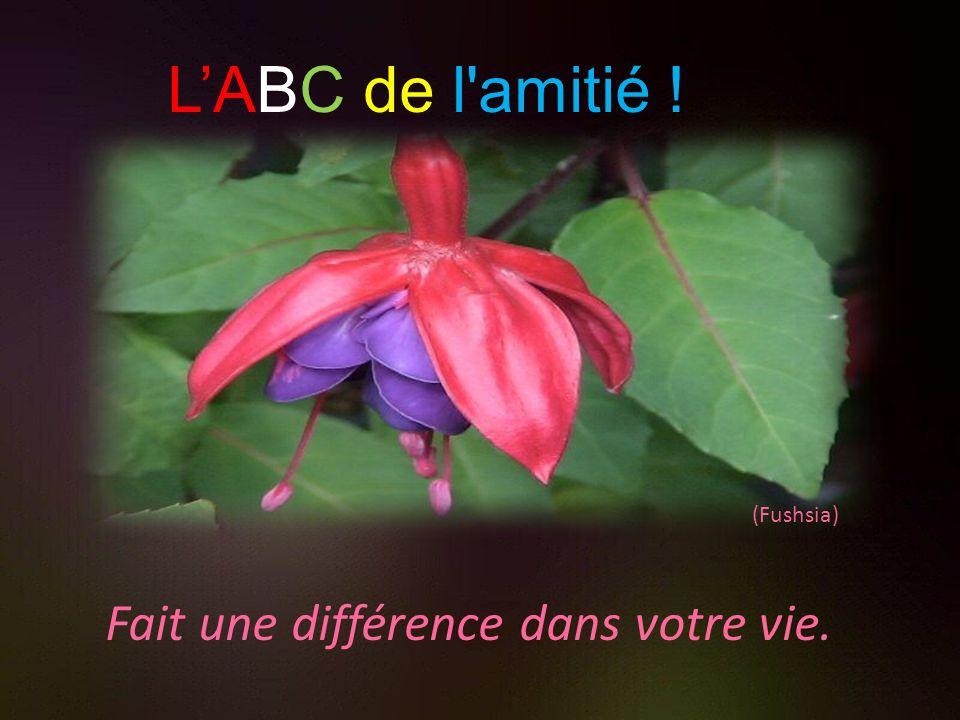 (Échinacée) Envisage lintégrité en vous (même les bouts inachevés) LABC de l'amitié !
