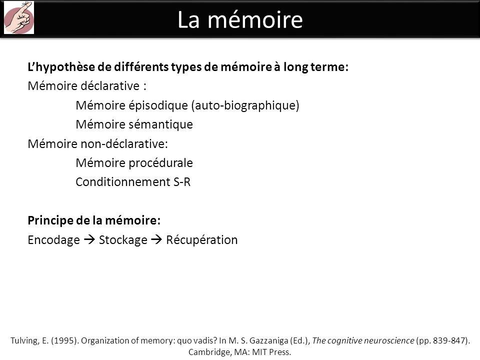 La mémoire Lhypothèse de différents types de mémoire à long terme: Mémoire déclarative : Mémoire épisodique (auto-biographique) Mémoire sémantique Mém