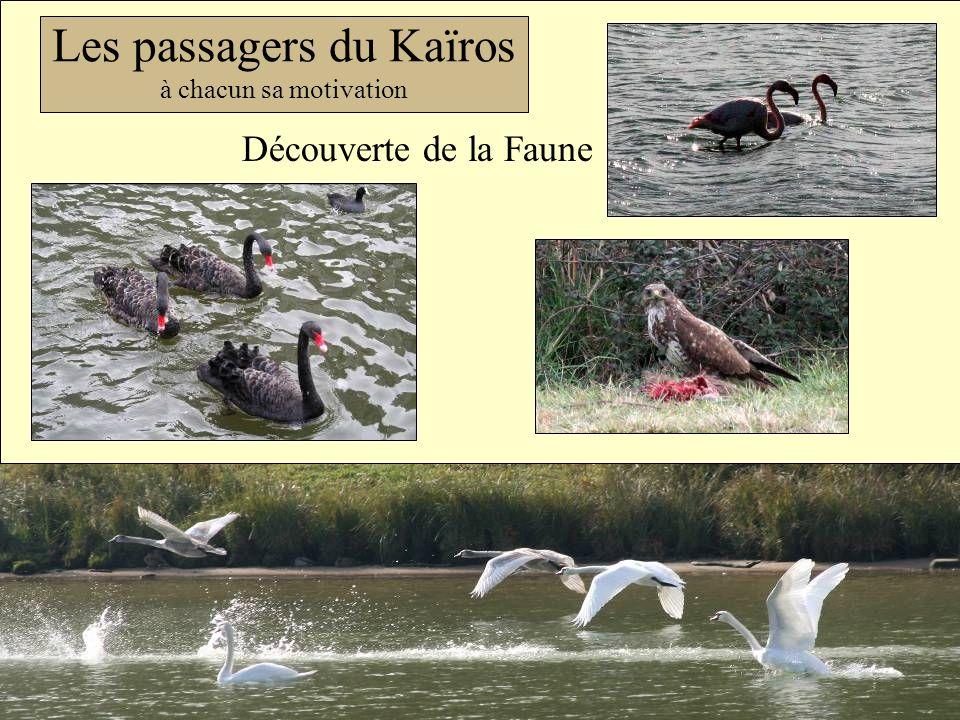 Les passagers du Kaïros à chacun sa motivation Découverte de la Faune