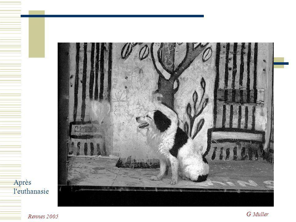 G Muller Rennes 2005 Gérer le deuil : anomalies L'animal de remplacement: ne doit pas être confondu avec l'animal réparateur (parfois très précoce et