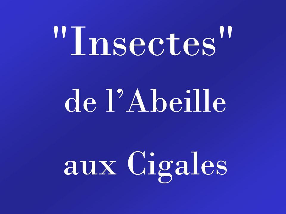 Insectes de lAbeille aux Cigales