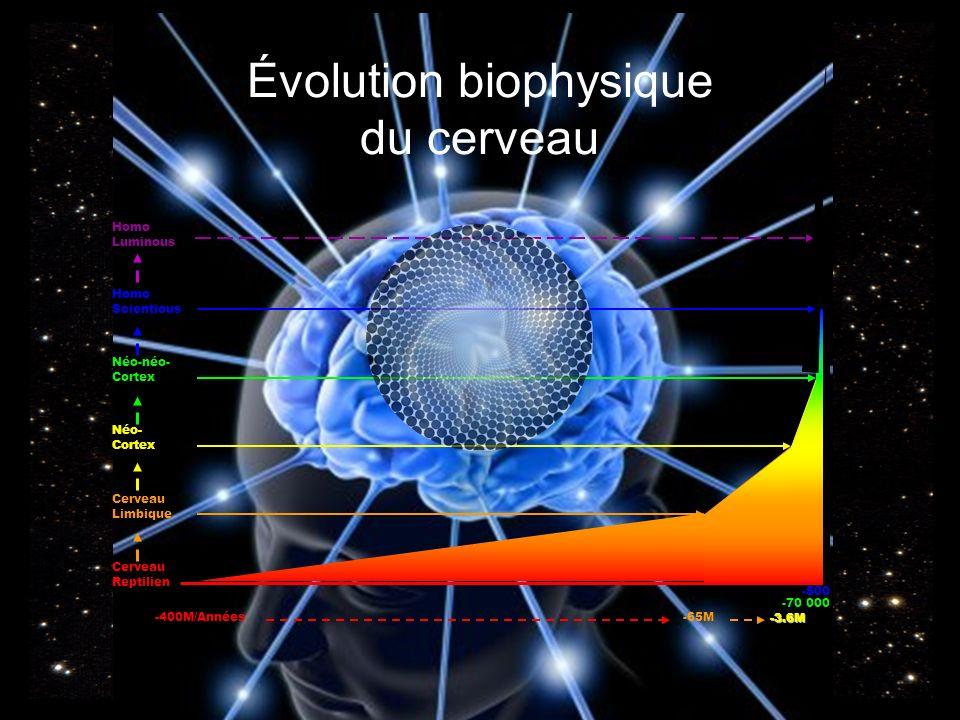 Évolution biophysique du cerveau -400M/Années Cerveau Reptilien -65M Cerveau Limbique -3.6M Néo- Cortex -70 000 Néo-néo- Cortex Homo Luminous -500 Homo Scientious