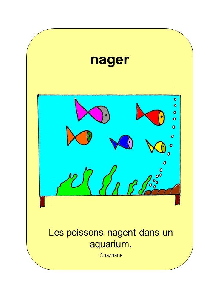 Les poissons nagent dans un aquarium. Chaznane nager