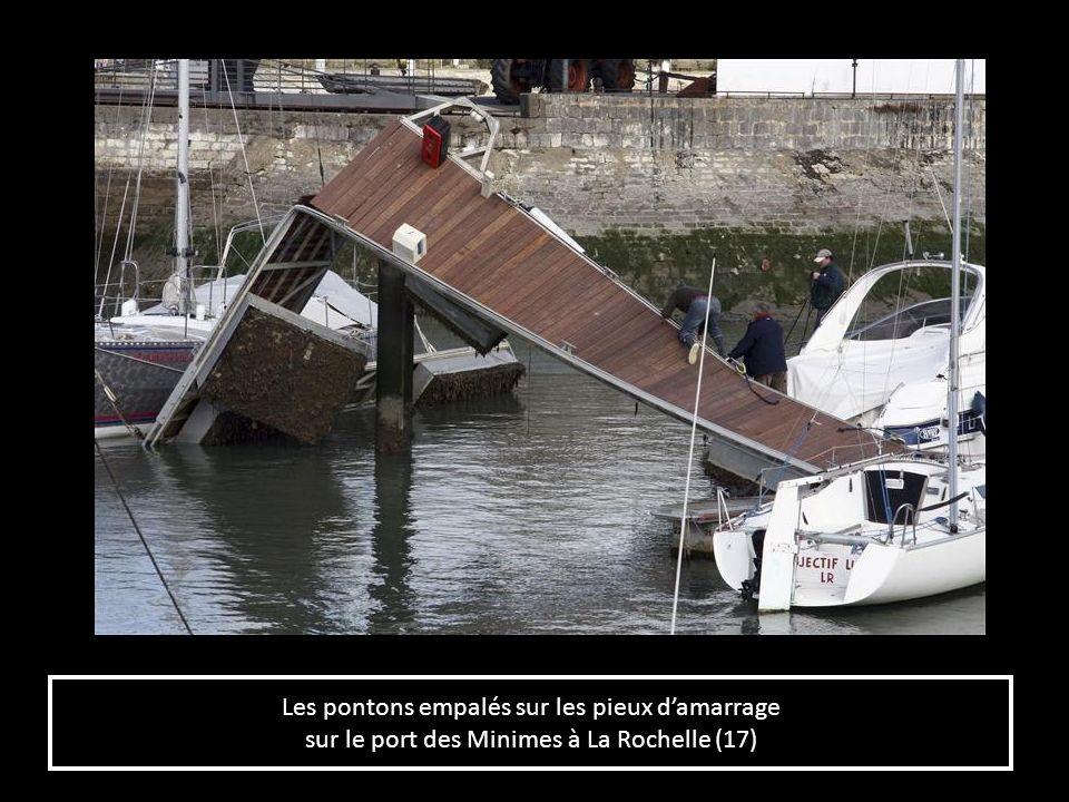 Les pontons empalés sur les pieux damarrage sur le port des Minimes à La Rochelle (17) Les pontons empalés sur les pieux damarrage sur le port des Min