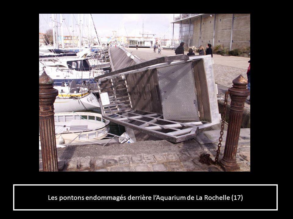 Les pontons endommagés derrière lAquarium de La Rochelle (17)