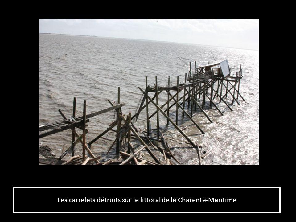 Les pontons empalés sur les pieux damarrage sur le port des Minimes à La Rochelle (17) Les pontons empalés sur les pieux damarrage sur le port des Minimes à La Rochelle (17)
