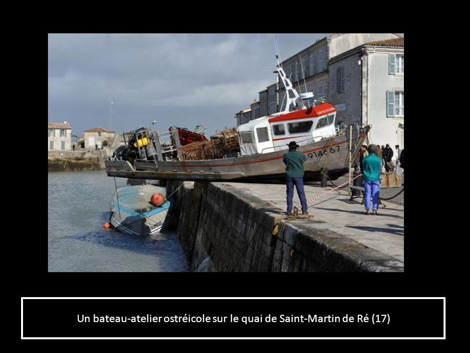 LAvenue Michel Crépeau à La Rochelle (17) après la tempête.