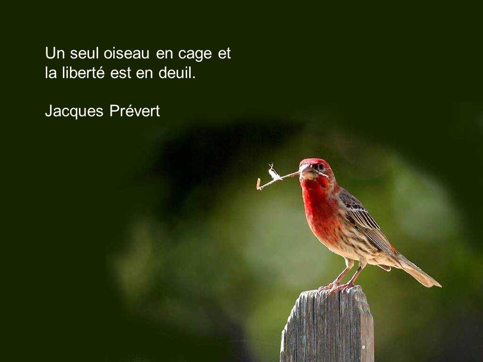 Quand on jette deux grains de blé à un oiseau, il en prend un, et la nature fait un épi de l autre.