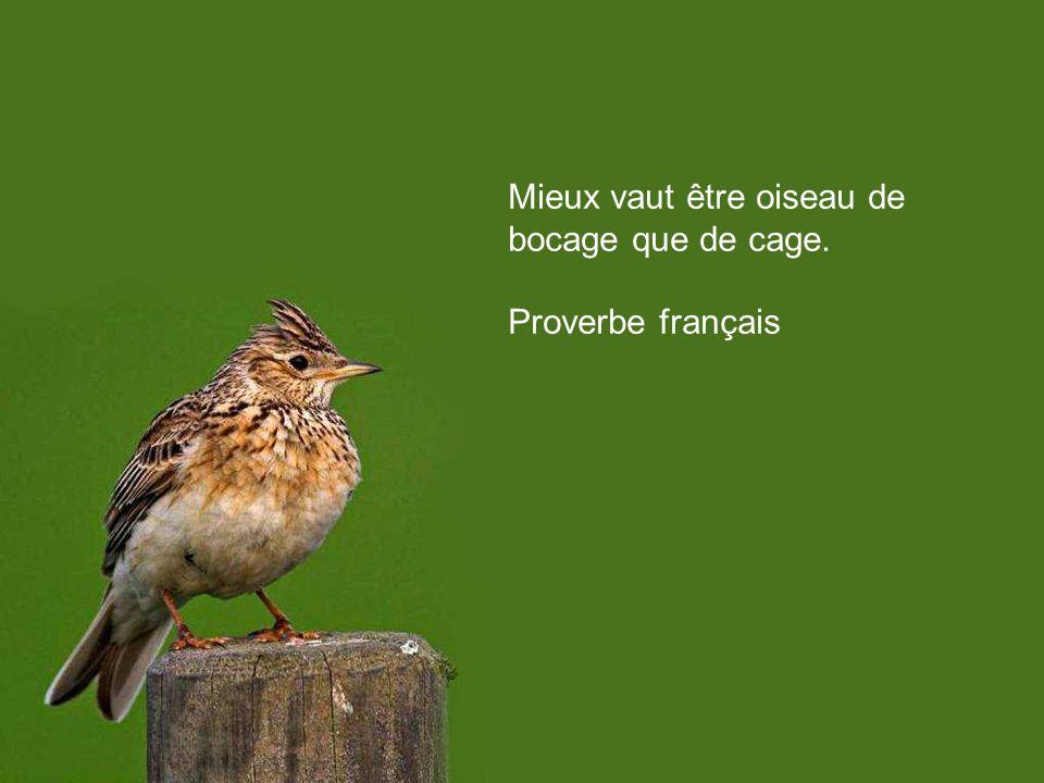 Un seul oiseau en cage et la liberté est en deuil. Jacques Prévert