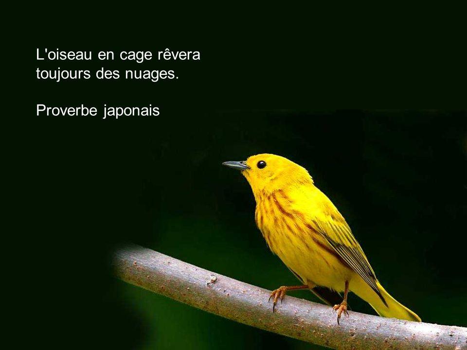 Mieux vaut être oiseau de bocage que de cage. Proverbe français