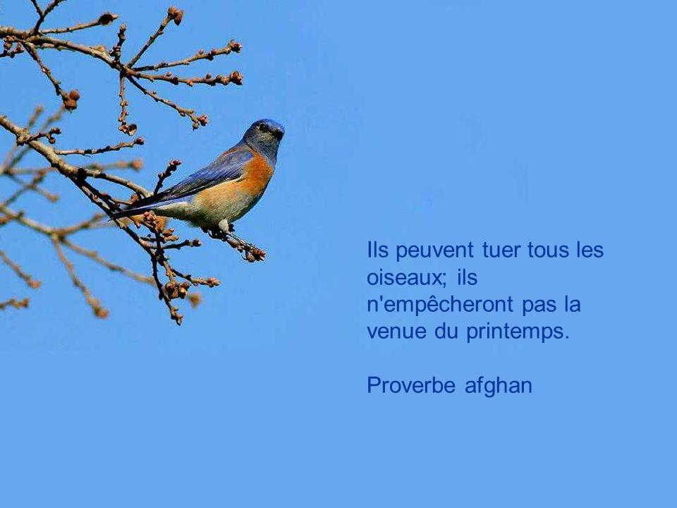 L oiseau en cage rêvera toujours des nuages. Proverbe japonais