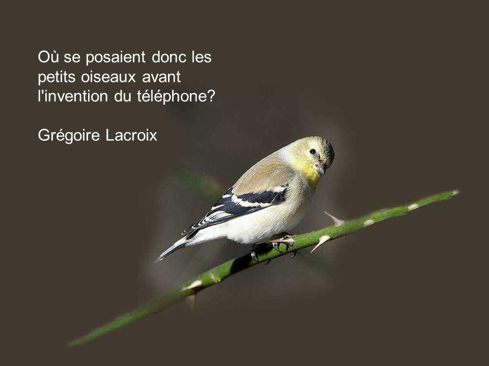 Ils peuvent tuer tous les oiseaux; ils n empêcheront pas la venue du printemps. Proverbe afghan