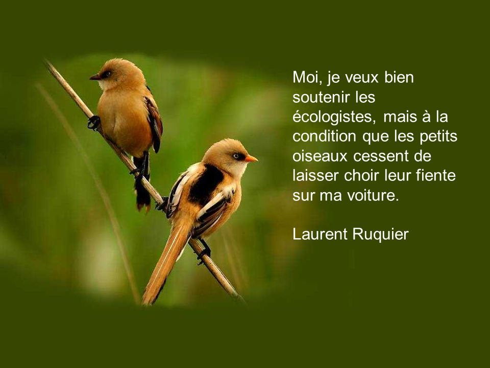 Où se posaient donc les petits oiseaux avant l invention du téléphone? Grégoire Lacroix