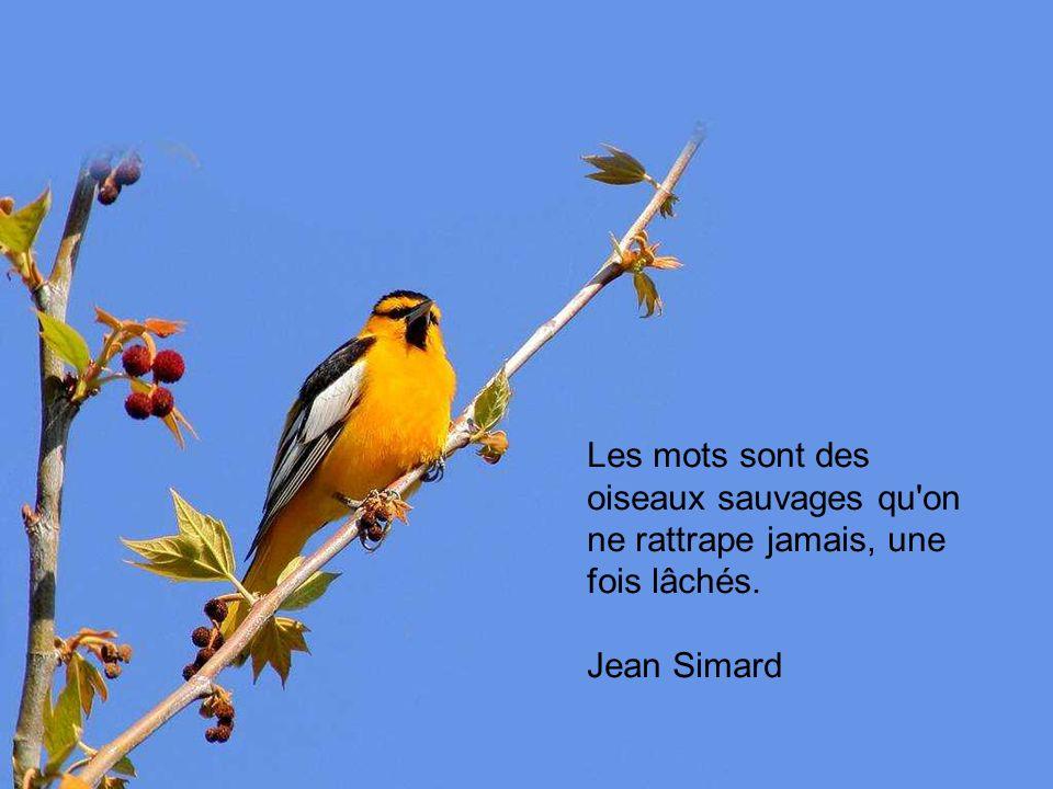 Les mots sont des oiseaux sauvages qu on ne rattrape jamais, une fois lâchés. Jean Simard