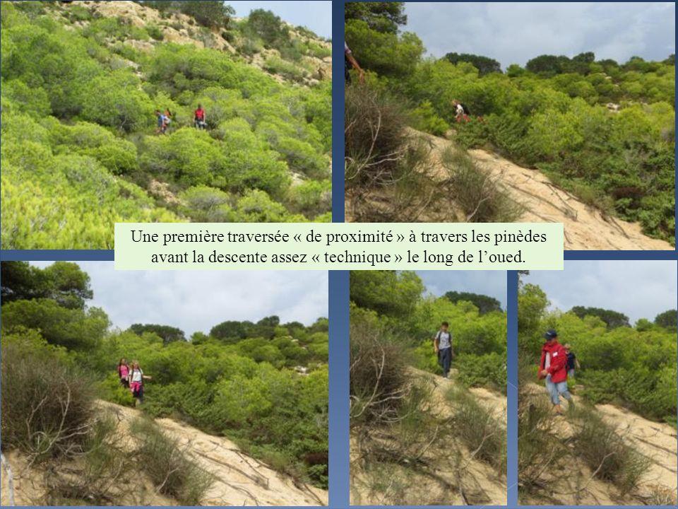 Une première traversée « de proximité » à travers les pinèdes avant la descente assez « technique » le long de loued.