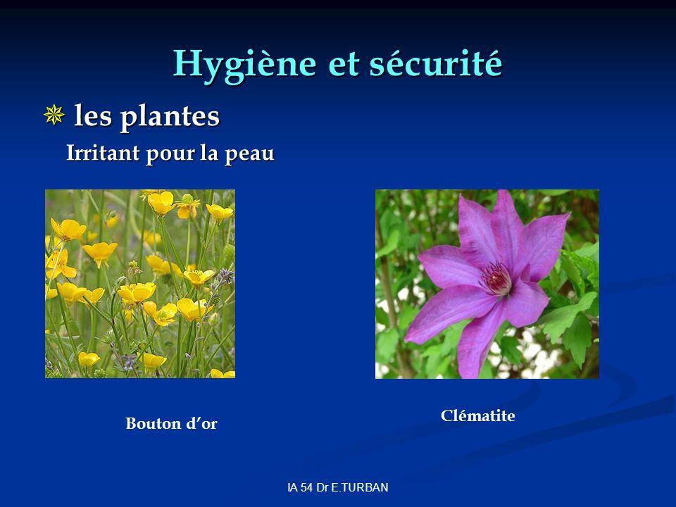 IA 54 Dr E.TURBAN Hygiène et sécurité les plantes les plantes Irritant pour la peau Bouton dor Clématite