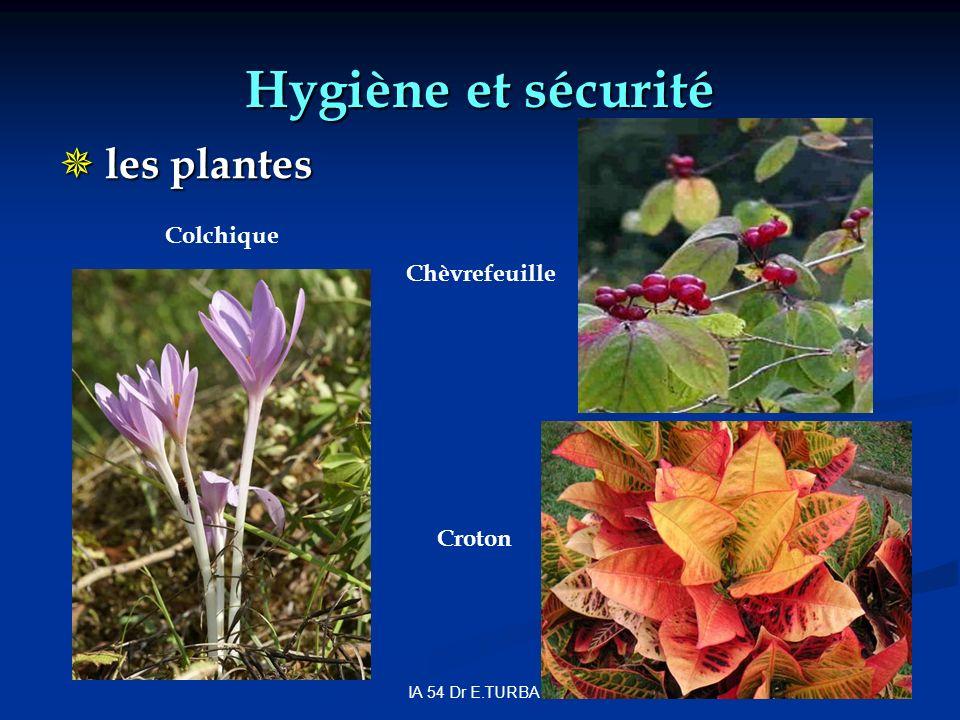 IA 54 Dr E.TURBAN Hygiène et sécurité les plantes les plantes Chèvrefeuille Colchique Croton