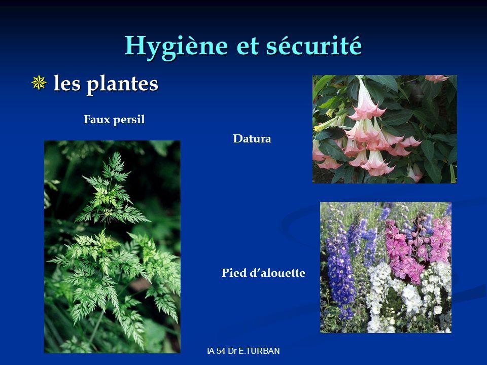 IA 54 Dr E.TURBAN Hygiène et sécurité les plantes les plantes Datura Faux persil Pied dalouette