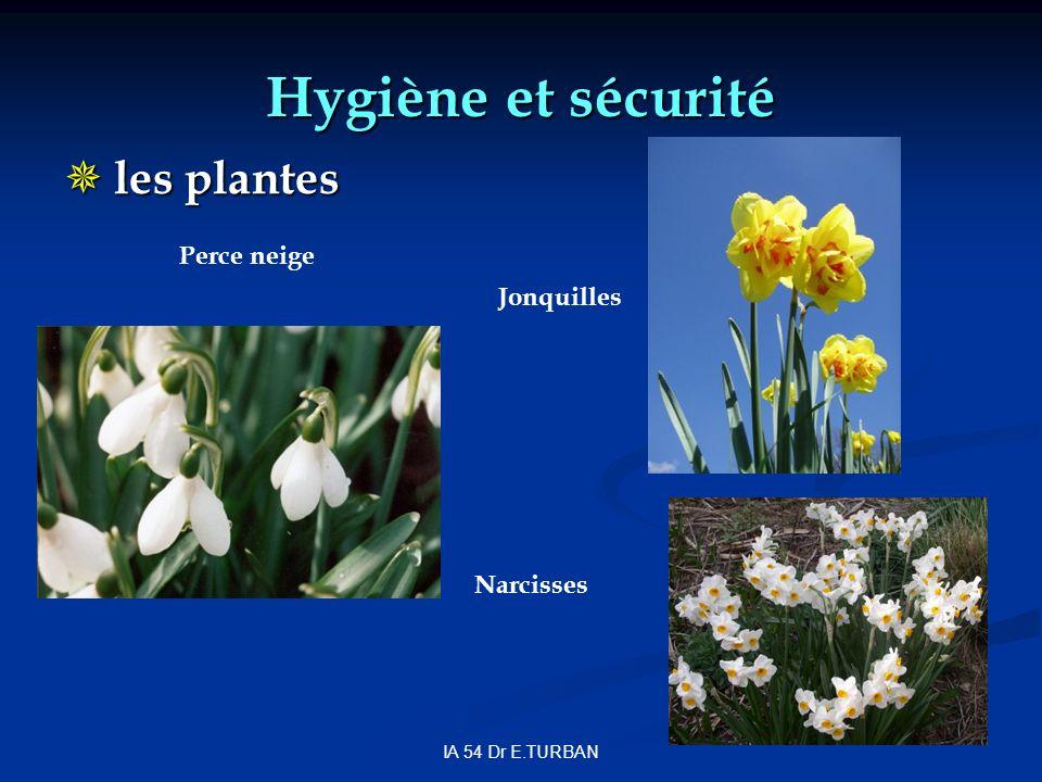 IA 54 Dr E.TURBAN Hygiène et sécurité les plantes les plantes Jonquilles Perce neige Narcisses