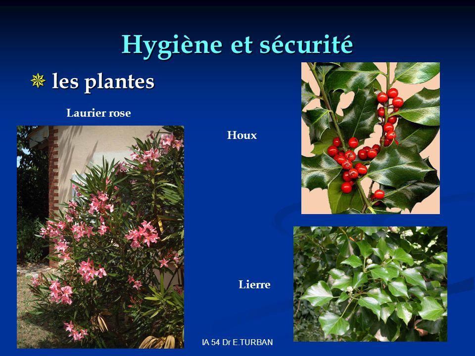 IA 54 Dr E.TURBAN Hygiène et sécurité les plantes les plantes Houx Laurier rose Lierre