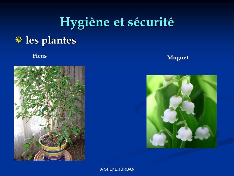 IA 54 Dr E.TURBAN Hygiène et sécurité les plantes les plantes Muguet Ficus