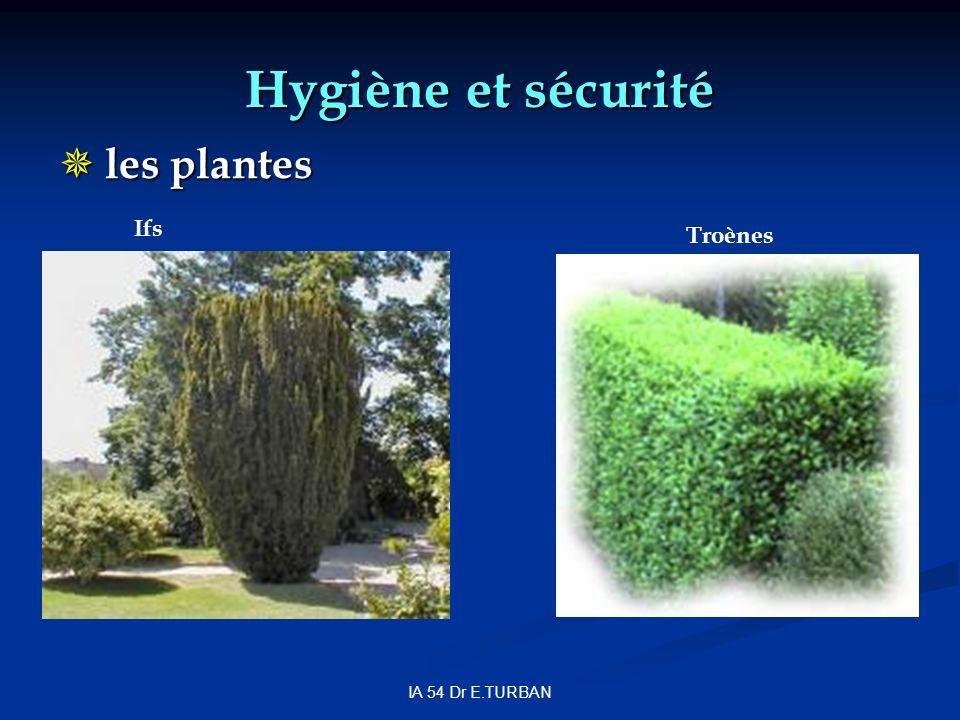 IA 54 Dr E.TURBAN Hygiène et sécurité les plantes les plantes Troènes Ifs